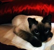 satyna satynka i jak Kot,kot Moris :D