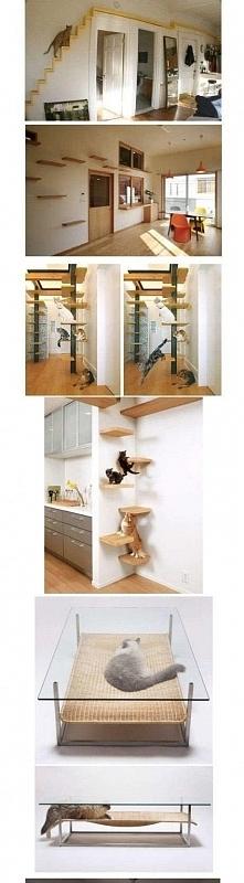 Dom dla kotów ;D