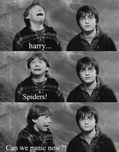 :D HP i KT :D