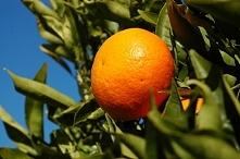 Dlaczego warto jeść mandarynki? Sprawdź na naszej stronie. Zdrowa dieta z Go&Move.