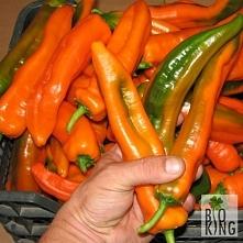 Coś dla ogrodników lubiących chrupać słodką paprykę - Corno di Toro to pyszny dodatek do kanapek.