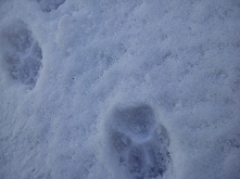 więcej zimowych zdjęć na blogu (klik) :)