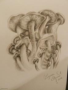 Grzyby  Ołówek w szkicowniku  ~Z.M.