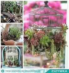 Roślinki w klatce
