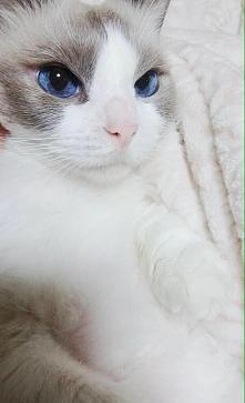 Te oczy *.*