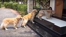 Grzeczne psy stoją w kolejce :-)