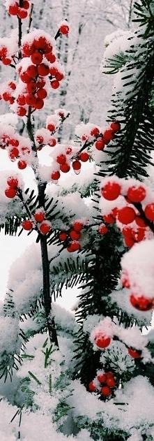 zimowo, niestety nie u nas