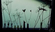 Suszone trawy