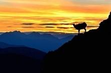Gdzieś w Tatrach, Polska