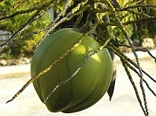 Kto lubi kokosy ręką w górę...