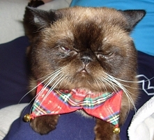 Bazylek, najukochańszy kotek