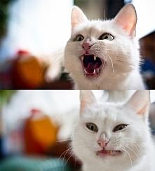 14 kotów z ludzkimi kłopota...