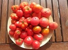 Masz ochotę na własne pomidory? Tu znajdziesz wszystko czego potrzebujesz by uprawiać pomidory na balkonie lub parapecie