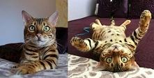 Piękny kot.