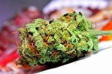 Art marijuana- instagram Queen_of_Cannabis