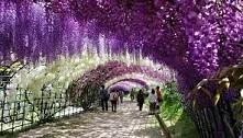 piękny ogród.