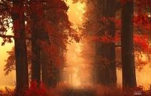 Przyroda jest piękna :)