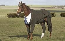 Koń w garniturze? Elegancko, haha :D