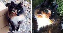 Ta wyjątkowej urody niewidoma kotka posiada niezwykłe oczy, którym nie sposób odmówić.