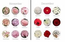 kwiaty na listopad/ grudzień