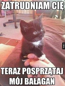 co ten koteł :)