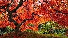 Oto 16 najpiękniejszych drzew na świecie. W cieniu którego z nich, chcielibyś...