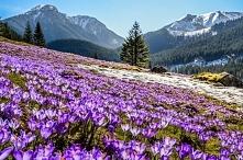 Dolina Chochołowska w Tatra...