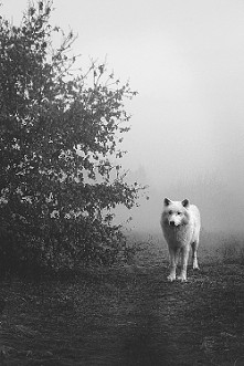 Wolf :')