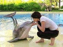 zwierzęta nasi najlepsi przyjaciele