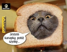 koteł :D
