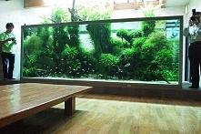 zamiast telewizora lepiej mieć akwarium..