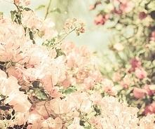 Kwitnące jabłonki..