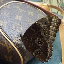 Louis Vuitton butterfly
