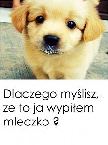 Słodziak :):):)