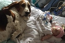 To 5-miesięczne dziecko umiera. Gdy zobaczysz, jak zachowują się psy, łza zak...