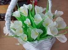 biała wiosna