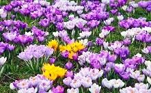 cudne kwiaty :*