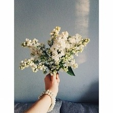 Białe bzy ❤
