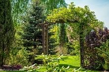 Ogród w cieniu brzóz - pergola... no po prostu pięknie...