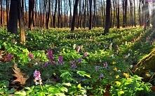 Leśne kwiaty :)