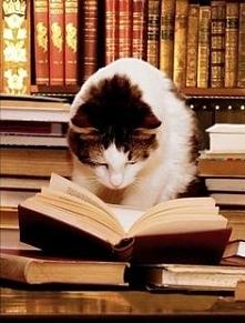 piękny widok: książki i kotek