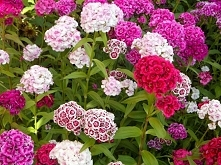 Piękne kwiaty :) idealnie n...