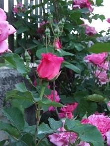 Wiosna w ogrodzie <3