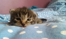 Mój mały kotek :)