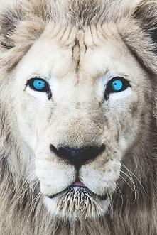 Te oczy