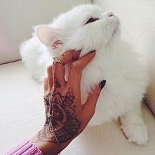 nie lubię kotów.. ale ten jest wyjątkowy ;) biały puszek ;) jak wam sie podob...