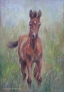 koń obraz malowany na zamówienie