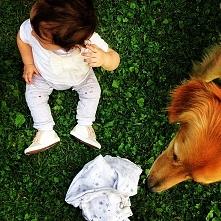 Jak przygotować psa na poja...