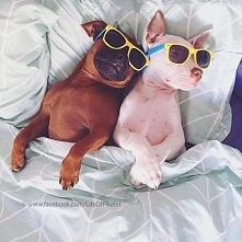 Te psy znalazły sobie niezwykłych przyjaciół. Będziesz zaskoczony!