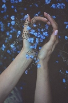 kwiaty...